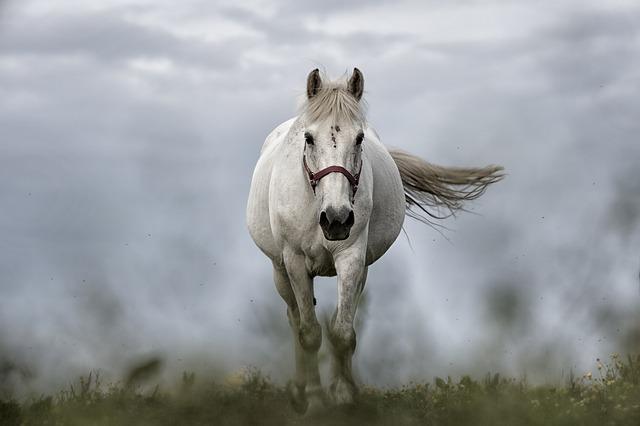 bílý kůň.jpg