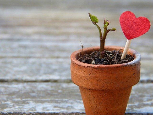 květináč se srdcem